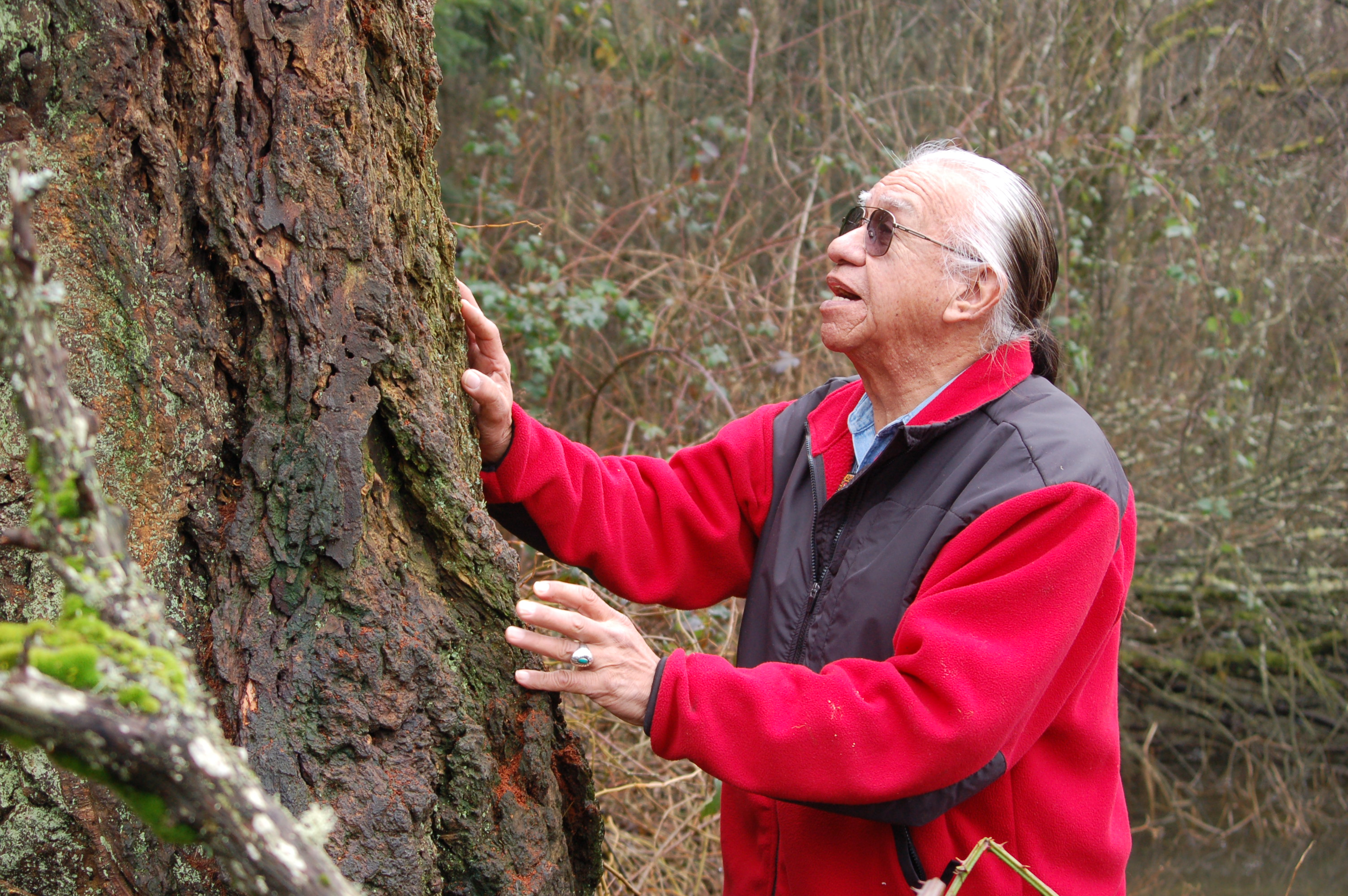 An older Native American man stands in a forest and touches a tree with both hands.