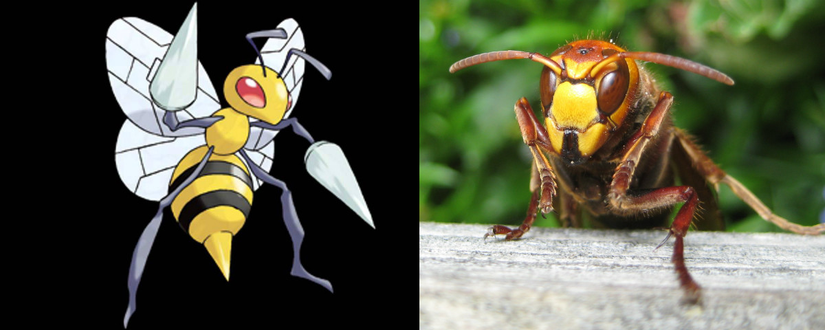 Beedrill and a hornet