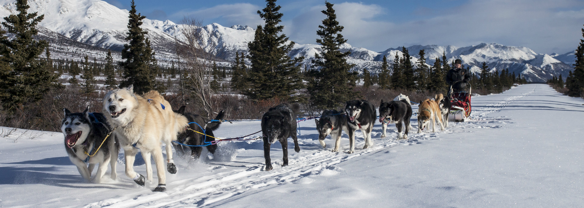 Us department of the interior a team of ten alaskan huskies run in pairs pulling a line dragging a sled with fandeluxe Images