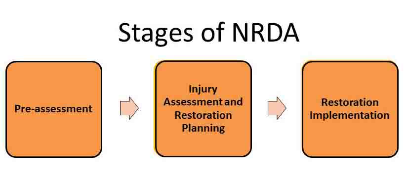 Stages of NRDA 4