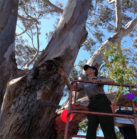Betty Reid Soskin in a cherry picker, trimming a piece of loose bark off of a tree.