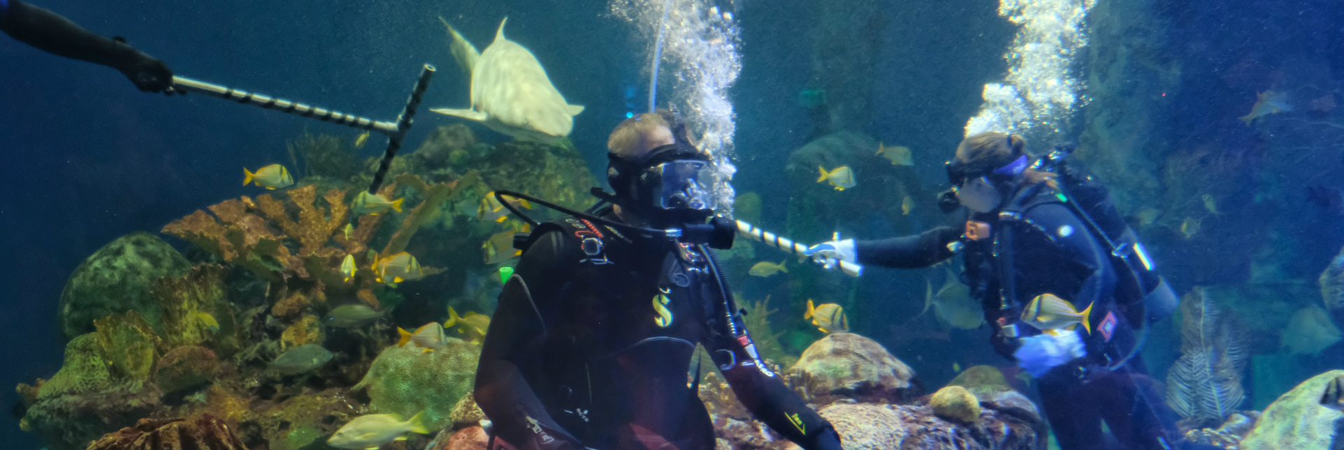 Secretary Zinke wearing SCUBA gear and diving underwater in a large aquarium tank with fish and rocks.