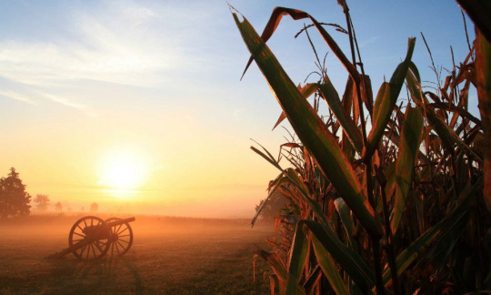 The orange sun rises on a foggy morning above a civil war canyon standing on a grassy lawn next to a field of tall corn plants.