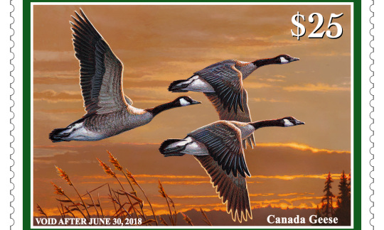 Three Canada geese fly across the sky as the sun sets.