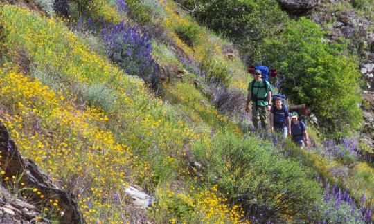 A white man and two white boys wearing hiking backpacks walk up a hillside covered in wildflowers.
