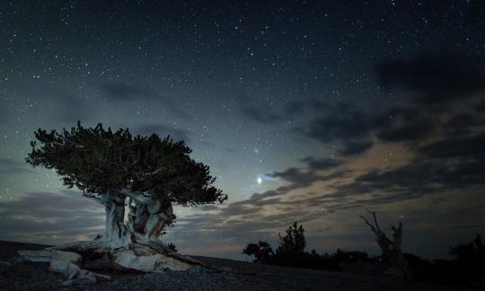 A twisty tree under a starry night