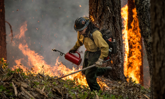 A firefighter carriers heavy tools and walks by a tree and grass on fire.