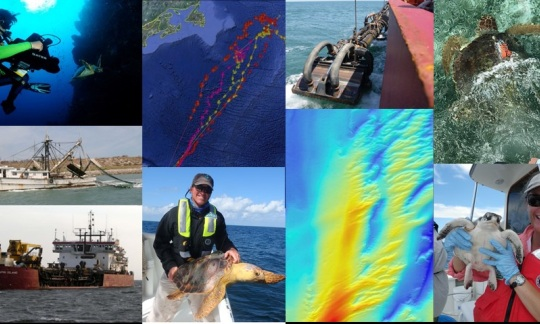 Sea Turtle Biologging: Making informed dredging decisions by understanding the where, why, and when @ U.S. Department of the Interior