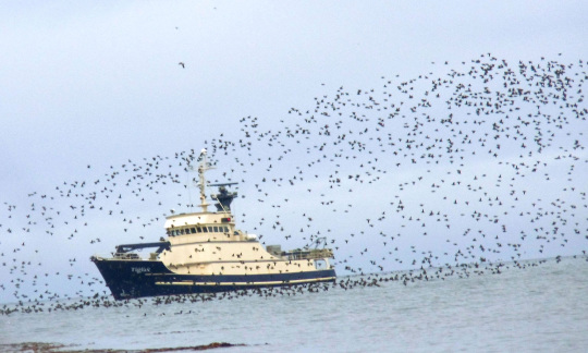 A large research ship on the ocean with a flock of birds in the air above it.