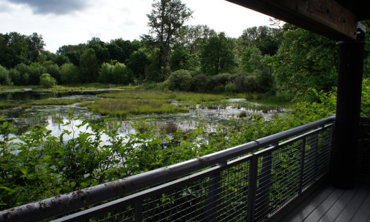 A view from a deck looking out at a green wetland and forest.
