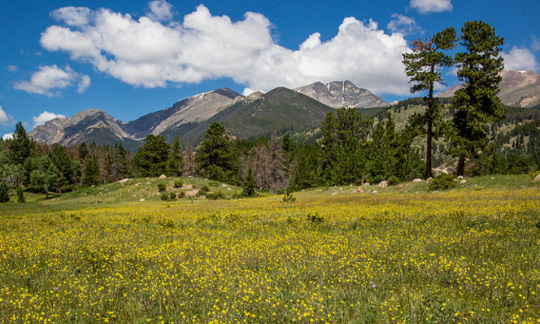 Foreground is a green meadow with yellow flowers; background is mountain with green trees below a blue sky with fluffy clouds
