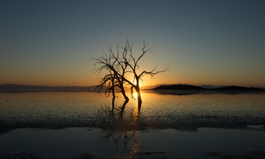 Twisted, leafless trees stand in shallow water
