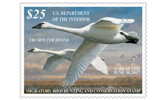 Duck stamp, featuring trumpeter swans