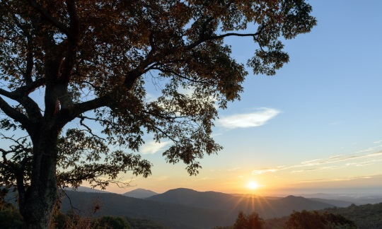 Sun rising over a low mountain range in the distance, while a tree stands in the foreground