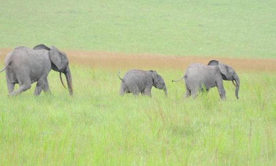 Elephants in an African Wildlife Refuge