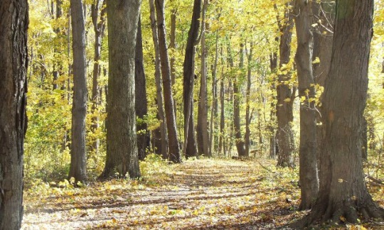 upland hardwood forest at Indian Trails Park, Ashtabula, Ohio