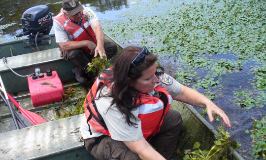 U.S. Fish and Wildlife Service employees pull invasive plants into a boat from a river.