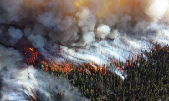 Aerial view of forest fire overtaking trees at Yellowstone National Park
