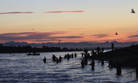 A large group of people standing in a river fishing with nets as the sun goes down.