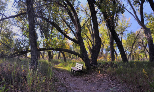 Wooden bench under trees at Confluence Trail at Fort Laramie National Historic Site.