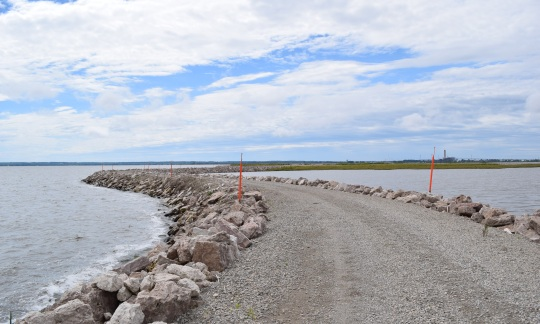 Man-made gravel dike leads to the lush, partially filled island. Photo by Kathryn Cawdrey.