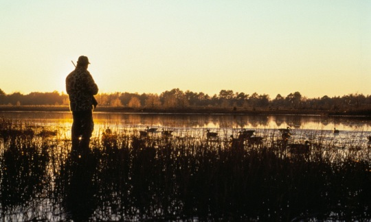 A man wearing hunting gear and holding a shotgun stands by a pond with duck decoys floating on the still water as a golden sunrise lights the sky.