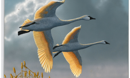 A painting of two large white birds flying in a cloudy sky.