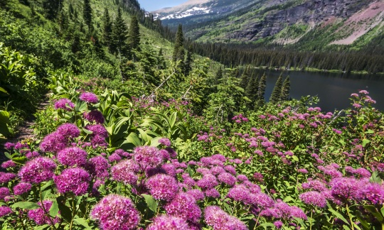 Pink flowers sit on a downward slope covered in green towards a body of water.