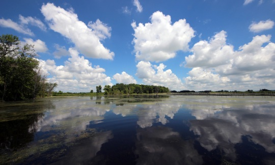 Puffy clouds and blue sky are reflected in the still waters of the marsh.