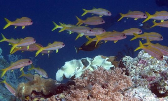 Interior Supports Coral Reef Management Fellowship Program