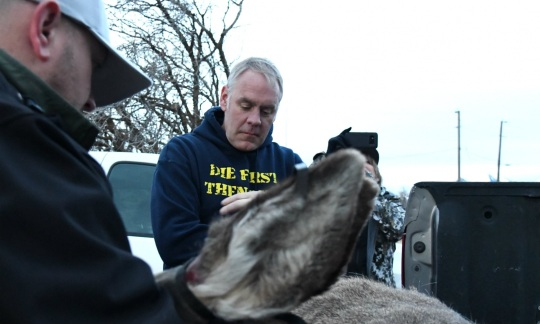 Secretary Zinke, a white man with gray hair wearing a sweatshirt, works with another white man wearing a hat to put a plastic tag on a mule deer laying in the back of a truck.