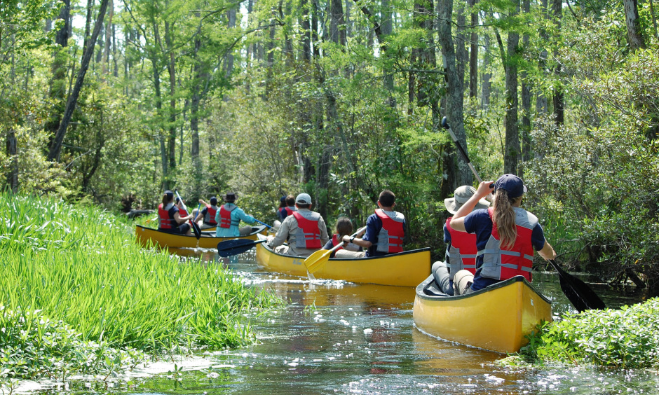 A group of people in canoes paddle down a narrow creek curving through a forest.