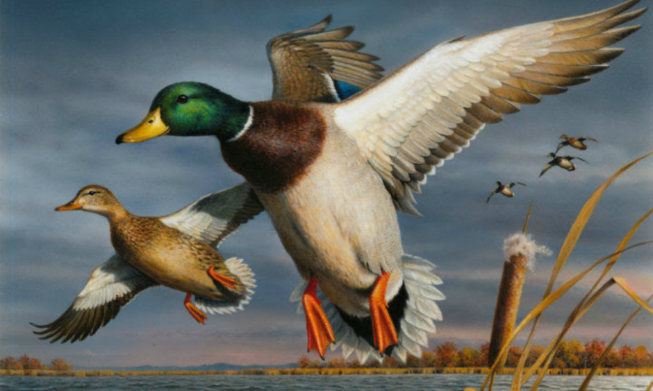 A painting of two ducks flying over a grassy marsh.
