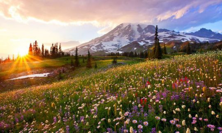 A wildflower meadow frames Mount Rainier at the national park's Paradise area