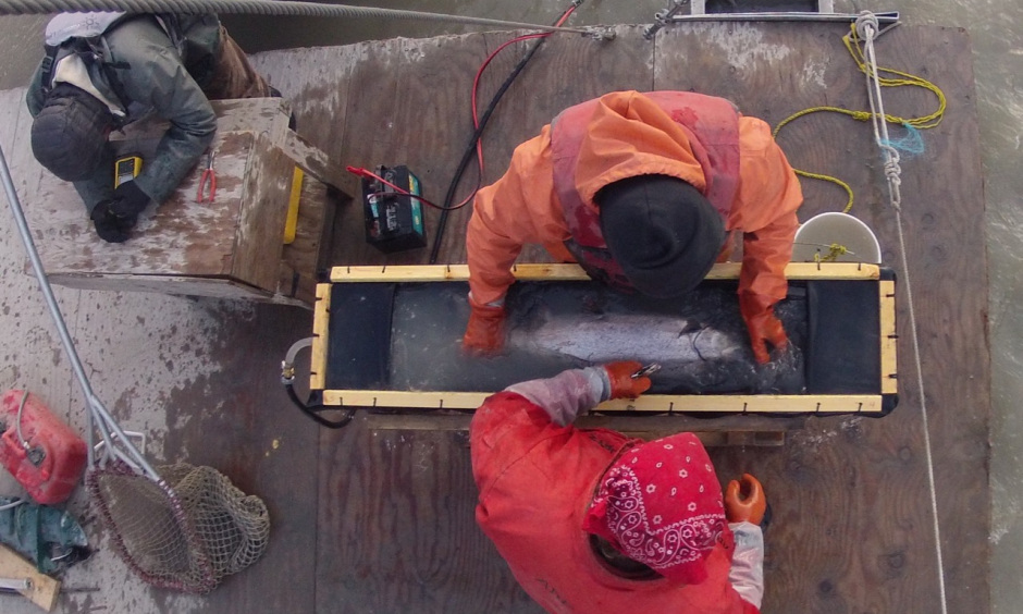 Employees sample fish
