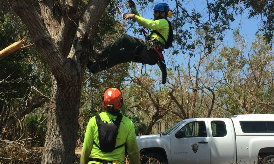 Man hangs in harness from tree while another man watches.