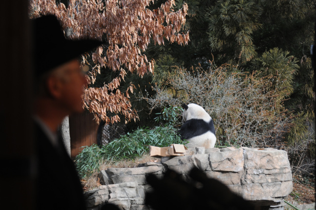 Secretary Salazar and a panda.