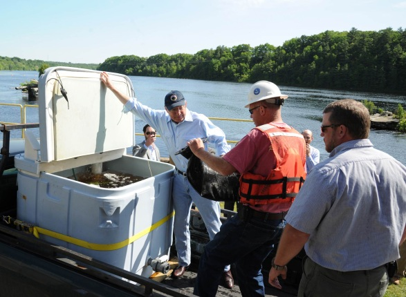Secretary Salazar holds a container open for a salmon from the Penobscot River that will be tagged released to track the migration of the salmon. Over two centuries, more than 100 dams have been erected throughout the watershed, altering the river's