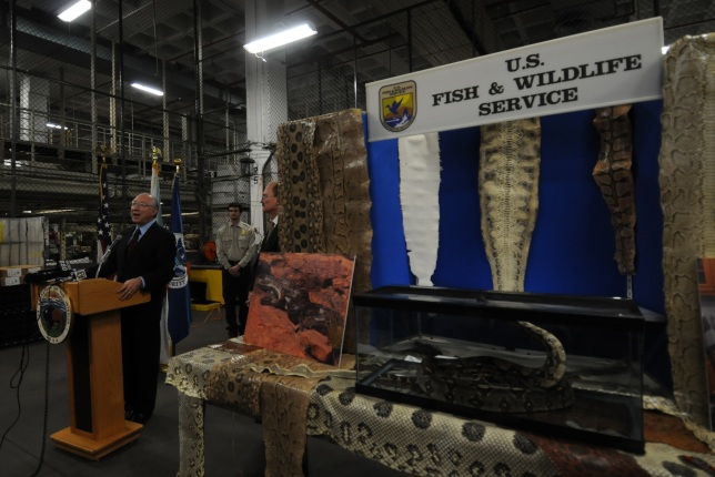 Secretary Salazar made his announcement next to a display showing how large boa constrictors and pythons can grow.