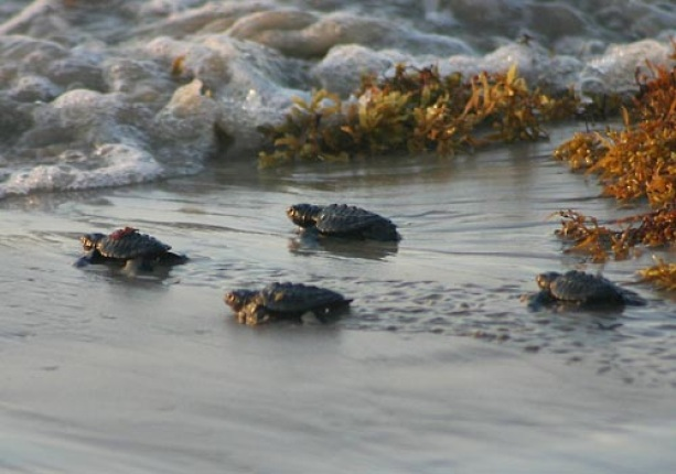 Padre Island teresa eimers NPS