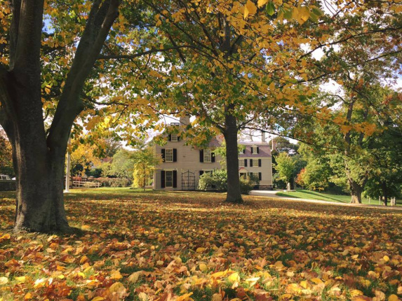 A white house with black paned windows sits in the background. It is surrounded by many trees with green and yellow leaves and the ground is also covered in yellow leaves that have fallen.