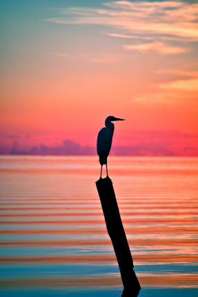 A bird resting on a post with a pastel sunrise background