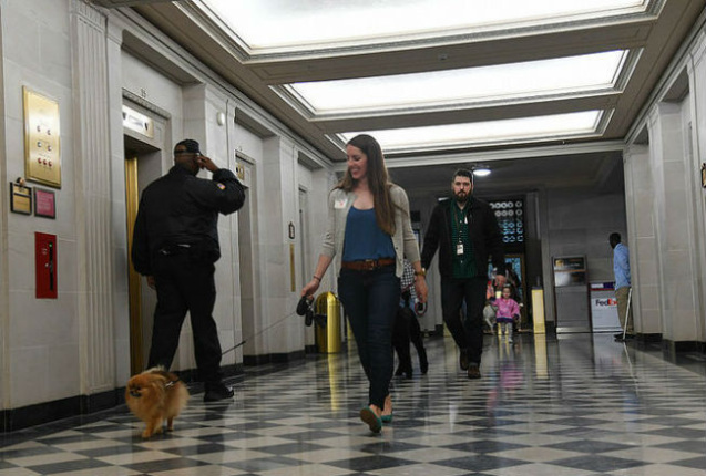 Woman in blue clothing leads a fluffy brown dog on a leash down a corridor followed by others