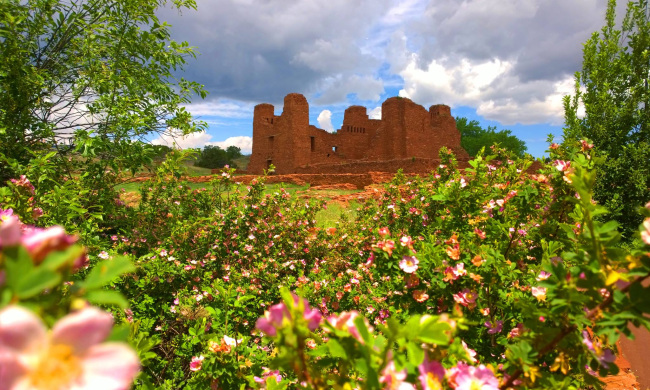 Pink flowers bloom on short bushes with the ruins of a large red brick building standing in a grassy yard behind them.