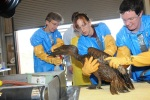Rescuers clean off a bird caught in the oil spill.