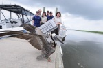 Workers set a pelican free.