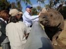 Secretary Salazar pets a rhinoceros at the San Diego Zoo