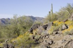 Containing more than 487,000 acres of Sonoran Desert landscape, the Sonoran Desert National Monument in Arizona presents an extraordinary array of biological, scientific and historic resources. The Sonoran Desert is the most biologically diverse of the No