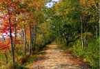 A hiking path running through an forest in autumn