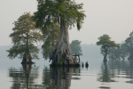 Cypress trees stand in still, shallow water at Great Dismal Swamp National Wildlife Refuge